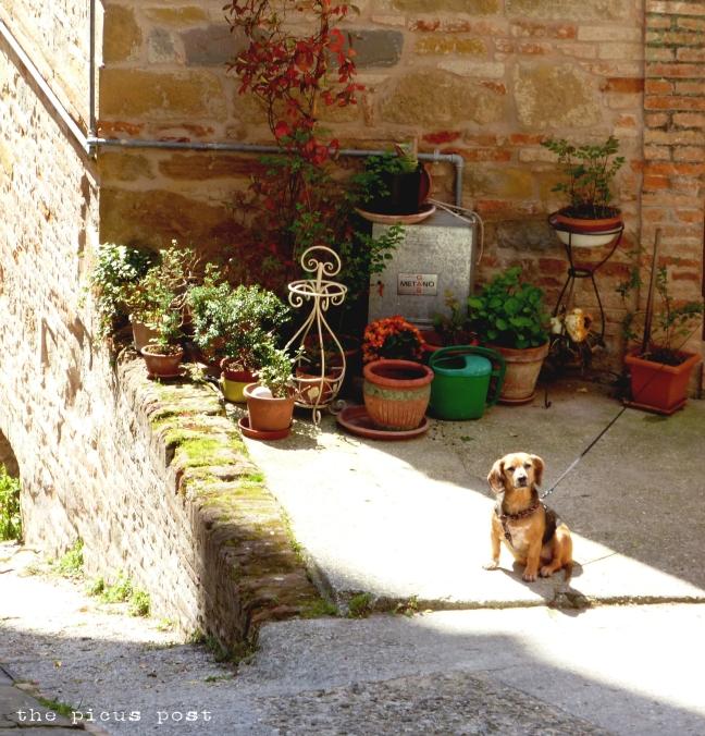 flowers amandola spring plants le marche